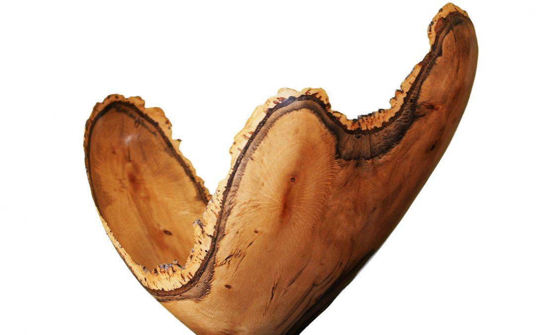 Cork Oak (4328)