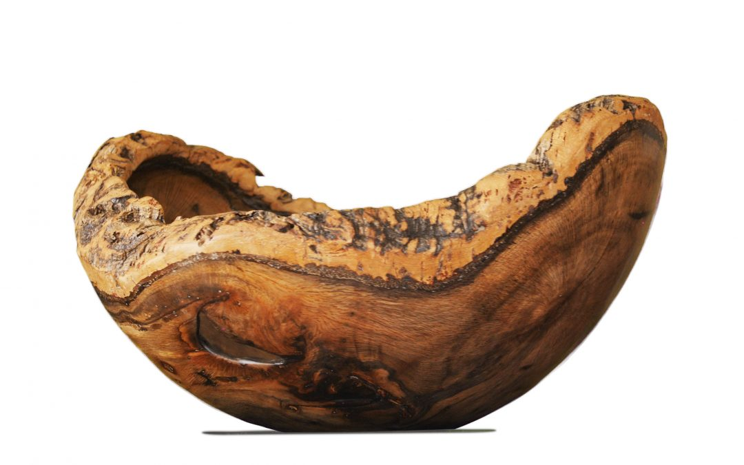 Cork Oak (4329)